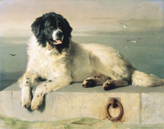 A Distinguished Member of the Humane Society, Edwin Landseer (17.25X22)