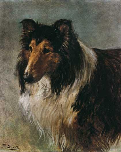 Collie (16X20)