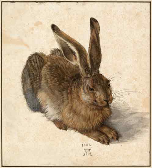 Hare,Durer (20X22)