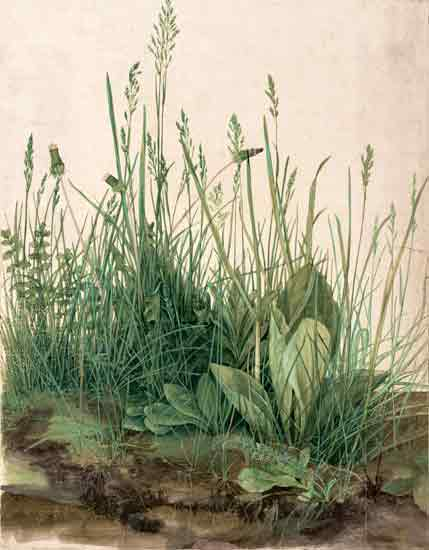 A Large Piece of Turf, Albrecht Durer (17X22)