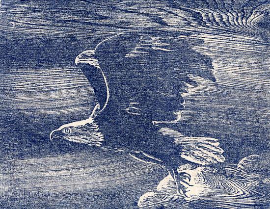 Eagle, Woodcut, Joyce Gibson