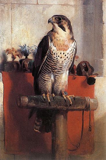 Falcon, Landseer (16X24)