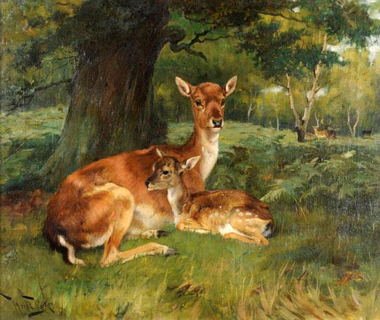 Fallow Deer, Wright Barker (18.5X22)