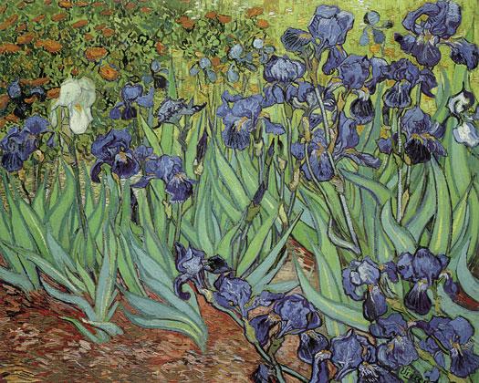 Irises, van Gogh, (20X24)