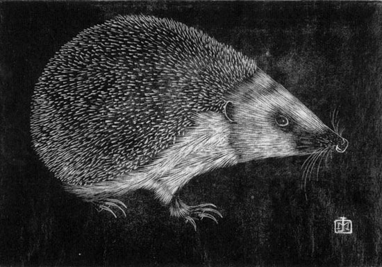 Hedgehog, Jan Mankes