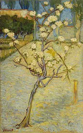 Pear Blossoms, Vincent van Gogh