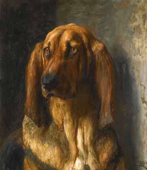 Sir Lancelot, A Bloodhound (19X22)