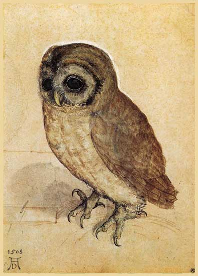 The Little Owl, Durer
