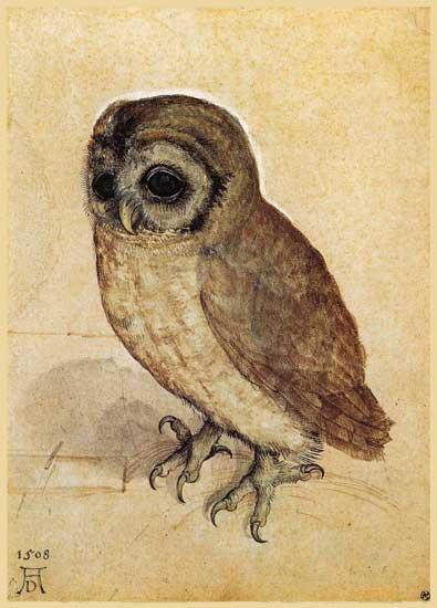 The Little Owl, Durer (9x12.6)