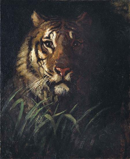 Tigers Head, Abbott  Handerson Thayer (18X22)