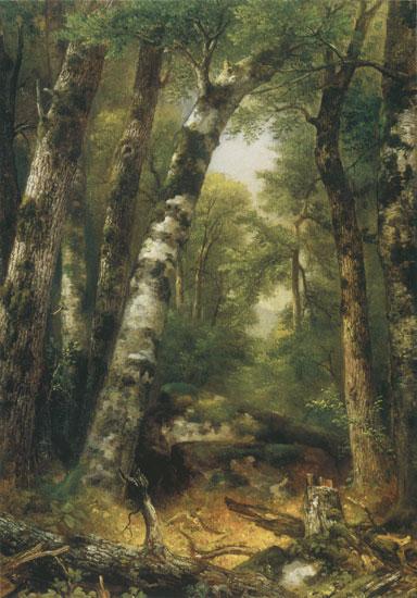 Woodland Glen, Asher Brown Durand (16.75X24)