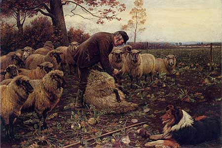 The Shepherd, Collie and Sheep